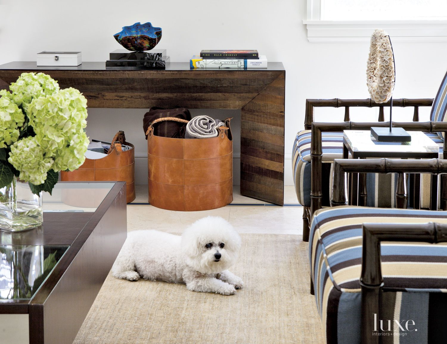 Transitional Neutral Family Room with Dog