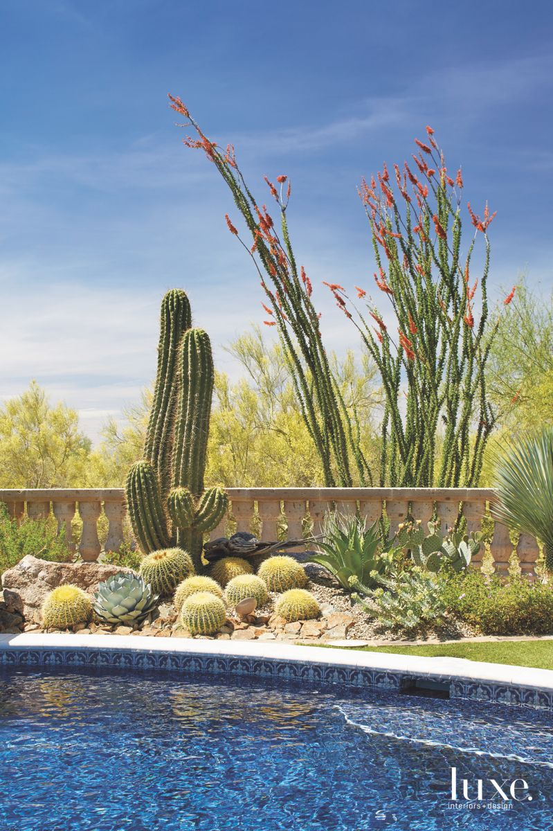 Tall and Local Cactus Pool Vignette with Blue Skies