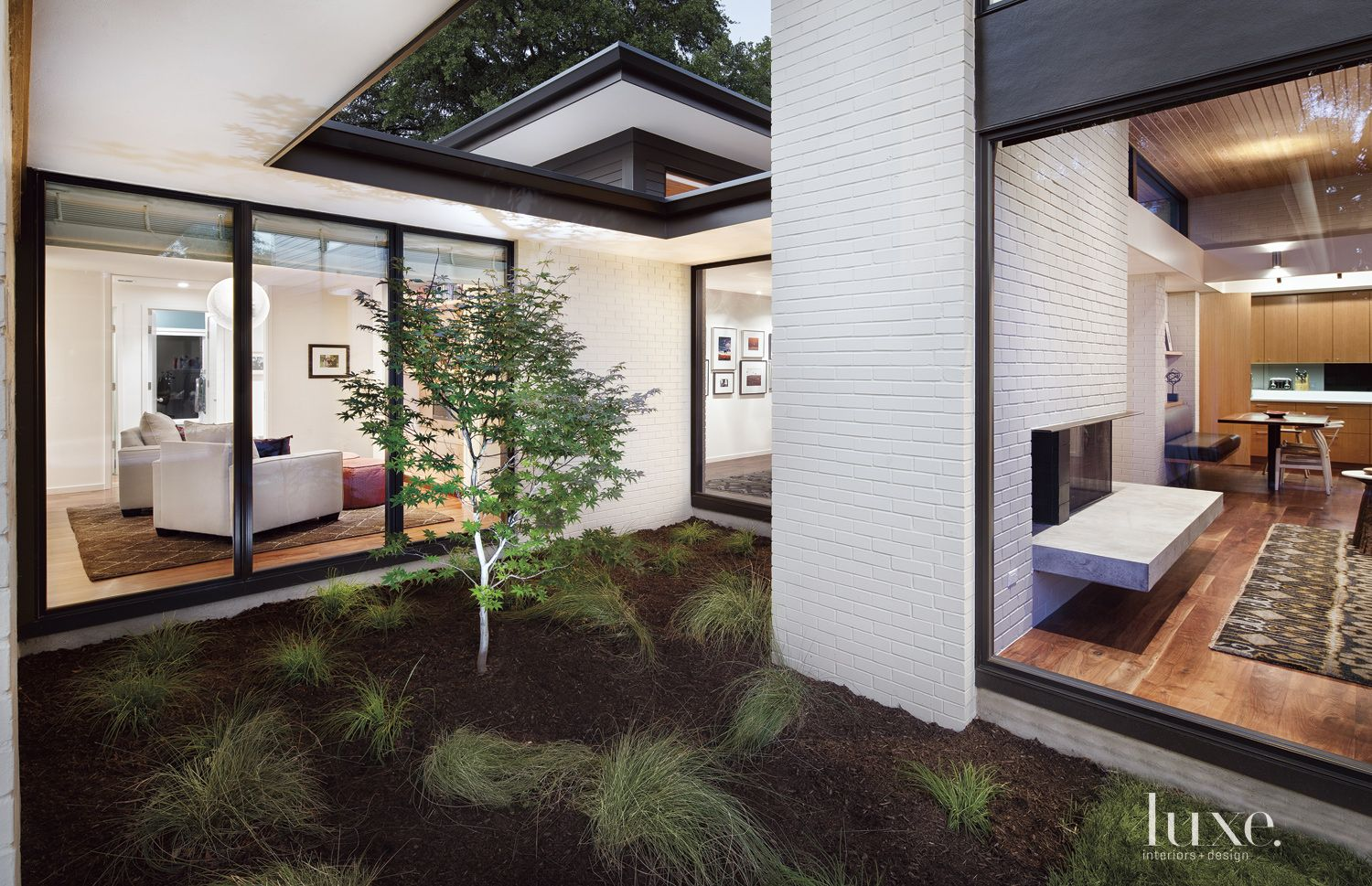 Contemporary White Courtyard with Japanese Maple Tree